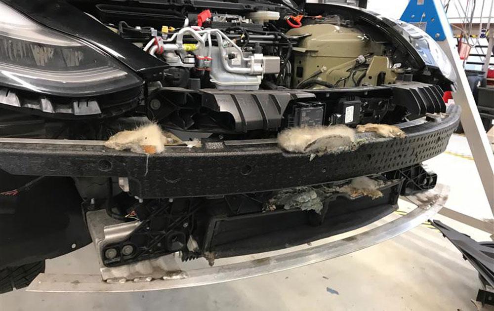 Ratten huisvesten zich in bumper van Tesla Model 3 – Autoblog.nl